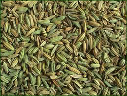 Fennel Seed from MAC INDUSTRIAL SUPPLY FREEZONE