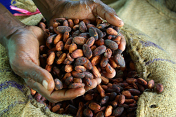 Cocoa and Coffee from NDAROW  COOPERATIVE SOCIETY LTD