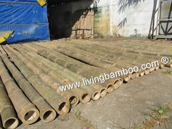 Bamboo Poles from TRE LANG LIVING BAMBOO CO., LTD