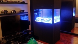 Custom Aquarium from BAHRAIN FISH BREEDER