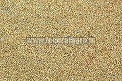 A Grade Millet Seeds from FEDERAL AGRO COMMODITIES EXCHANGE & SUPPLY CO.