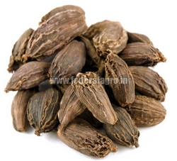 Black Cardamom from FEDERAL AGRO COMMODITIES EXCHANGE & SUPPLY CO.