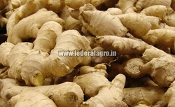Ginger from FEDERAL AGRO COMMODITIES EXCHANGE & SUPPLY CO.