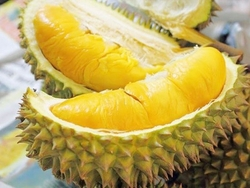 Durian from HANG XANH INTERNATIONAL COMPANY