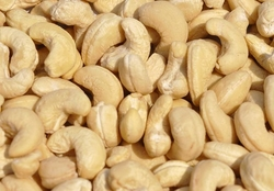 Cashew nuts and other nuts and kernels