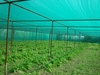 SHADE NET SUPPLIER DUBAI