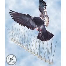 ANTI BIRD PIGEON CONTROL Steel Bird Wire Spikes Pigeon Repeller Suppliers Exporters Fire Escape Chutes, SS Bird wire, Dealers Hotel Contractors in UAE  Dubai, Abu Dhabi, Qatar, Saudi, Jordan, Iran, Iran, Africa, Kenya, UK, Ethiopia, Ghana, Algeria, Baku,  from CHAMPIONS ENERGY, FENCE FENCING SUPPLIERS UAE, WWW.CHAMPIONS123.COM