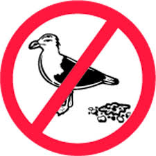 BIRD CONTROL SERVICES DUBAI from BENCHMARK PEST CONTROL & CLEANING SERVICES &TRADING LLC