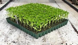 NURSERY TRAY IN SAUDI ARABIA from HAMZA MAROOF TRADING LLC