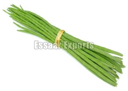 Fresh Drumsticks from ESSAAR EXPORTS