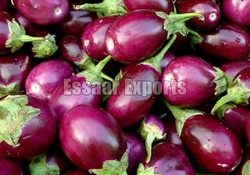 Fresh Brinjal from ESSAAR EXPORTS