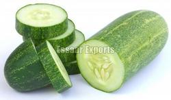 Fresh Cucumbers from ESSAAR EXPORTS