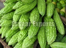 Fresh Bitter Gourds from ESSAAR EXPORTS
