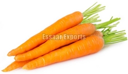 Fresh Carrot from ESSAAR EXPORTS