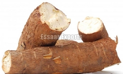 Fresh Tapioca Root from ESSAAR EXPORTS