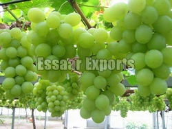 Fresh Grapes from ESSAAR EXPORTS