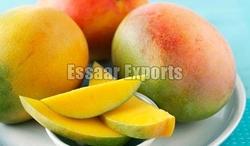 MANGO from ESSAAR EXPORTS