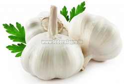 Fresh Garlic from FEDERAL AGRO COMMODITIES EXCHANGE & SUPPLY CO.