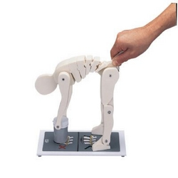 Lifting manikin model from ARASCA MEDICAL EQUIPMENT TRADING LLC