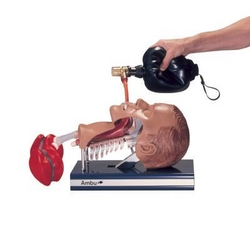 AMBU INTUBATION TRAINER from ARASCA MEDICAL EQUIPMENT TRADING LLC