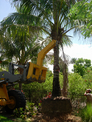 Removal of Trees  from ABDUL JABBAR GENERAL CONTRACTING LLC