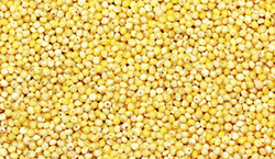 Millet from PETROFAST MIDDLE EAST FZC
