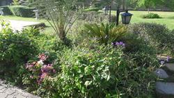 Garden maintinance from ABDULNASER AL HASHEMI LANDSCAPE GARDENING