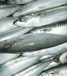 Seafood Trader in UAE from FORFAR SEAFOOD