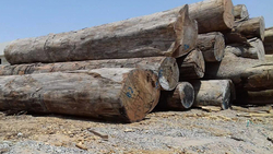 Hard Wood  from WESTERN CORPORATION LIMITED FZE