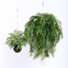 Artificial Hanging Ferns