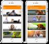 Mobile App & Website Development