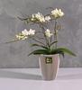 Indoor Plants: Buy Indoor Plants Online at Best Pr ...